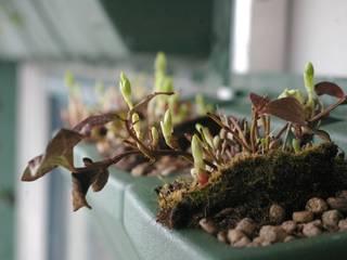 Vertical Flore Garden Plants & flowers