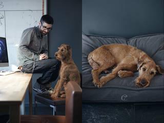C7 DOG BED COZY: moderne Wohnzimmer von Cloud 7 Finest Interiors for Dogs & Dog Lovers