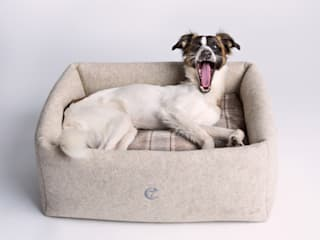modern  by Cloud 7 Finest Interiors for Dogs & Dog Lovers, Modern