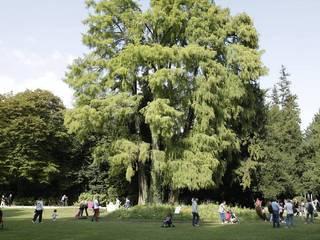 Un tempo pensato per sognare Spazi commerciali moderni di GREENCURE - landscape & healing gardens Moderno