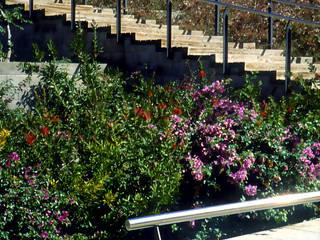 Jardin méditerranéen par Jordi Farrando arquitecte Méditerranéen