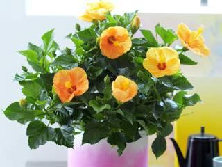 Pflanzenfreude.de Dining roomAccessories & decoration