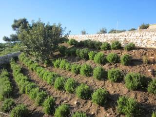 Giardino Cudiano scarpate con essenze mediterranee di William Inclimona Mediterraneo