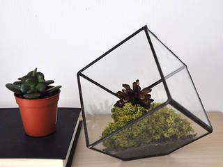 Terrario Cubo:  de estilo  de ZetaGlass