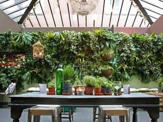 Artificial Living Green wall, Vertical Garden: rustic  by Evergreen Trees & Shrubs, Rustic
