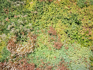 Minimalist style garden by exTerra | Consulenze ambientali e Design nel verde Minimalist