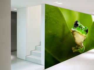 Frog:  Wände von wallandimage GmbH