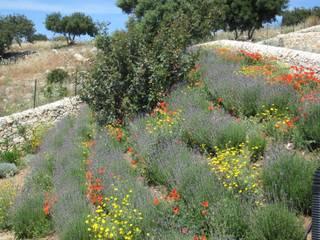 scarpate aromatiche in fioritura di William Inclimona Mediterraneo