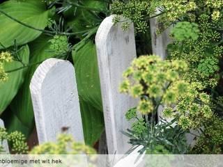 Sfeerbeeld: schermbloemige met wit hek:  Tuin door Groene Kikker Tuinontwerp