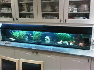 Kitchen Aquarium: tropical  by Midland Aquatics, Tropical