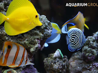 Kitchen Splashback Through Wall Aquarium:  Kitchen by AquariumGroup