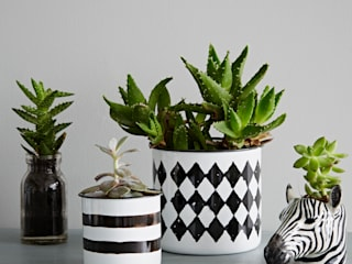 Monochrome Planter Collection:  Household by rigby & mac,