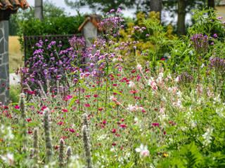 Giardino xerico di campagna: Giardino in stile In stile Country di Ginkgo Giardini