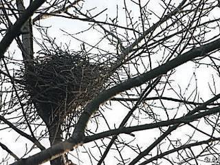Nest Konzept:   von Despang Architekten