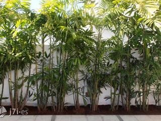 7 detalles para una pared tropical Jardines de estilo tropical de Jardineria 7 islas Tropical