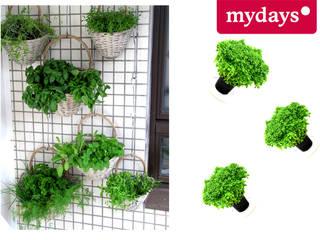 Kräutergarten DIY von mydays Mediterran