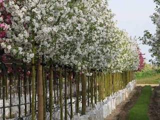 Ornamental Crab Apples Country style garden by Barcham Trees Plc Country