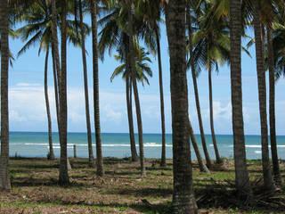 Jardines de estilo tropical por Cria Arquitetura