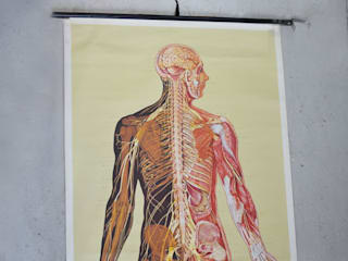 Large 1950's German 'Nervensystem' anatomical linen backed poster: classic  by Proper., Classic