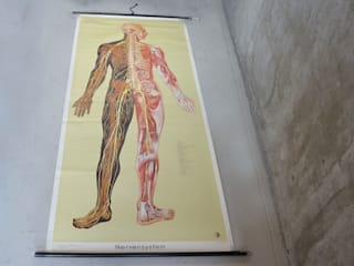 Large 1950's German 'Nervensystem' anatomical linen backed poster Proper. Dining roomAccessories & decoration