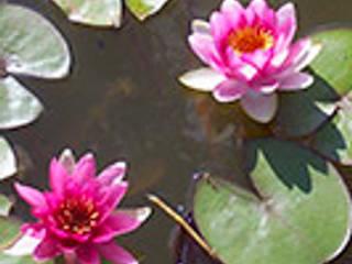 fuentesycascadas:  de estilo  por Water Life S.A,Tropical
