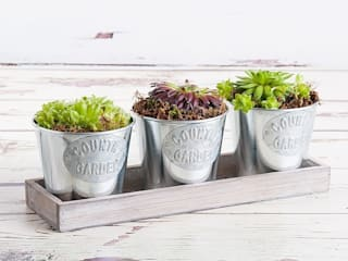 Summer Trio Planter:   by Appleyard London