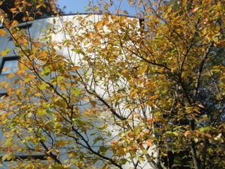 ジューンベリーの紅葉: MA設計室が手掛けた家です。