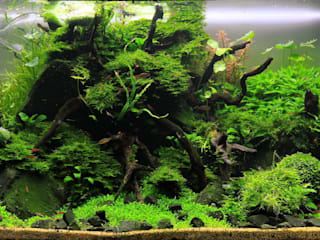 eclectic  by Aquasabi, Eclectic