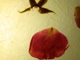 Deteil Rosenblüten in Deckenschale:   von Mohnlicht