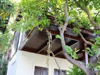 Jardines modernos: Ideas, imágenes y decoración de AÇIT MİMARLIK DEKORASYON İNŞ. SAN. TİC. LTD. Moderno