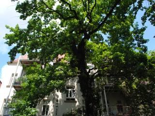Baumpflege von Haedi-Flor Meisterbetrieb