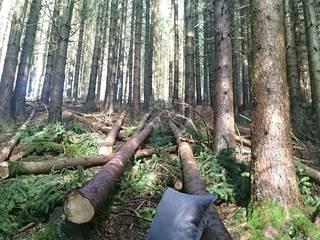 Waldlust:   von Aurata-Design