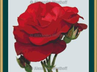 Kreuzstichvorlage Rose:   von Alexandra Westhoff Stickdesign