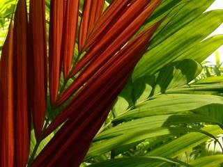 Plantas Jardines modernos de Tropical America landscaping Moderno