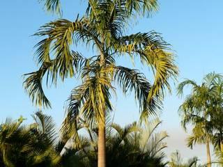 Árboles Jardines modernos de Tropical America landscaping Moderno