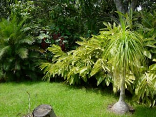 Tropical America landscaping Modern style gardens
