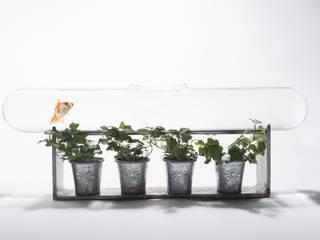 PRODUIT l'aquarium : ligne de nage pour Edmond le poisson rouge Frédéric TABARY Paysagisme d'intérieur Verre Transparent