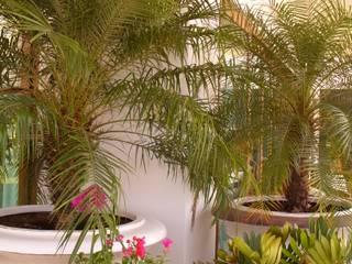 ESPACIOS CON MACETAS Jardines tropicales de Tropico Jardineria Tropical