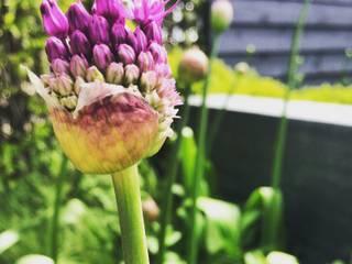 modern Garden by Hoveniersbedrijf Tim Kok