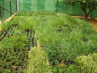 Jardín vertical en Elche - plantas: Bares y Clubs de estilo  de Jardines Verticales Paisajismo Urbano