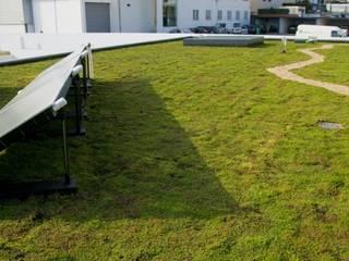 Cobertura ajardinada em Vila Nova de Gaia: Jardins  por Neoturf