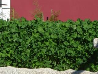Cobertura ajardinada em Cortegaça: Jardins  por Neoturf