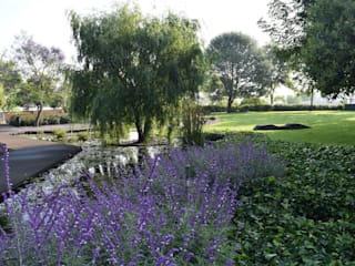 LdelP Jardines modernos de Ambiente Arquitectos Asociados, S.A de C.V. Moderno