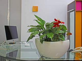Zeitgemässe Innenraumbegrünung Moderne Bürogebäude von BAUMHAUS GmbH Raumbegrünung Pflanzenpflege Modern