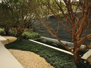 Jardines de estilo  por alexandre galhego paisagismo, Tropical
