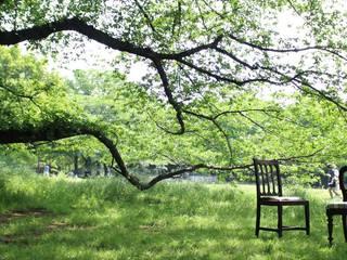 椅子は木からできています。: おしゃれな椅子店が手掛けたです。,