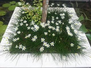 Garden by Luciana Moraes Paisagismo, Classic