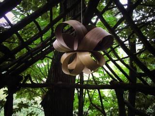 Papillon di Balume Scandinavo