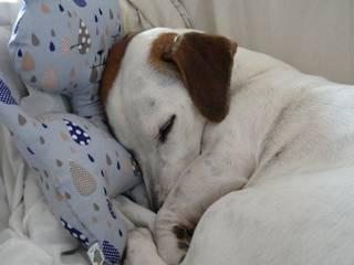 Le coussin Pikou:  de style  par Dog and Sofa by Tin-Pin déco