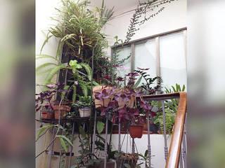 Genghis Studio Jardines de invierno de estilo moderno